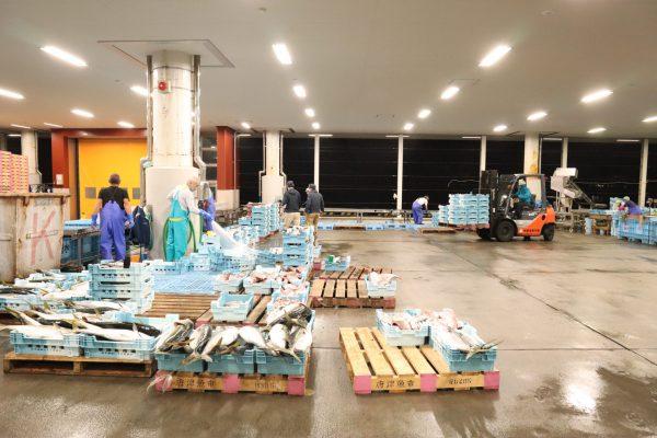 唐津魚市場2